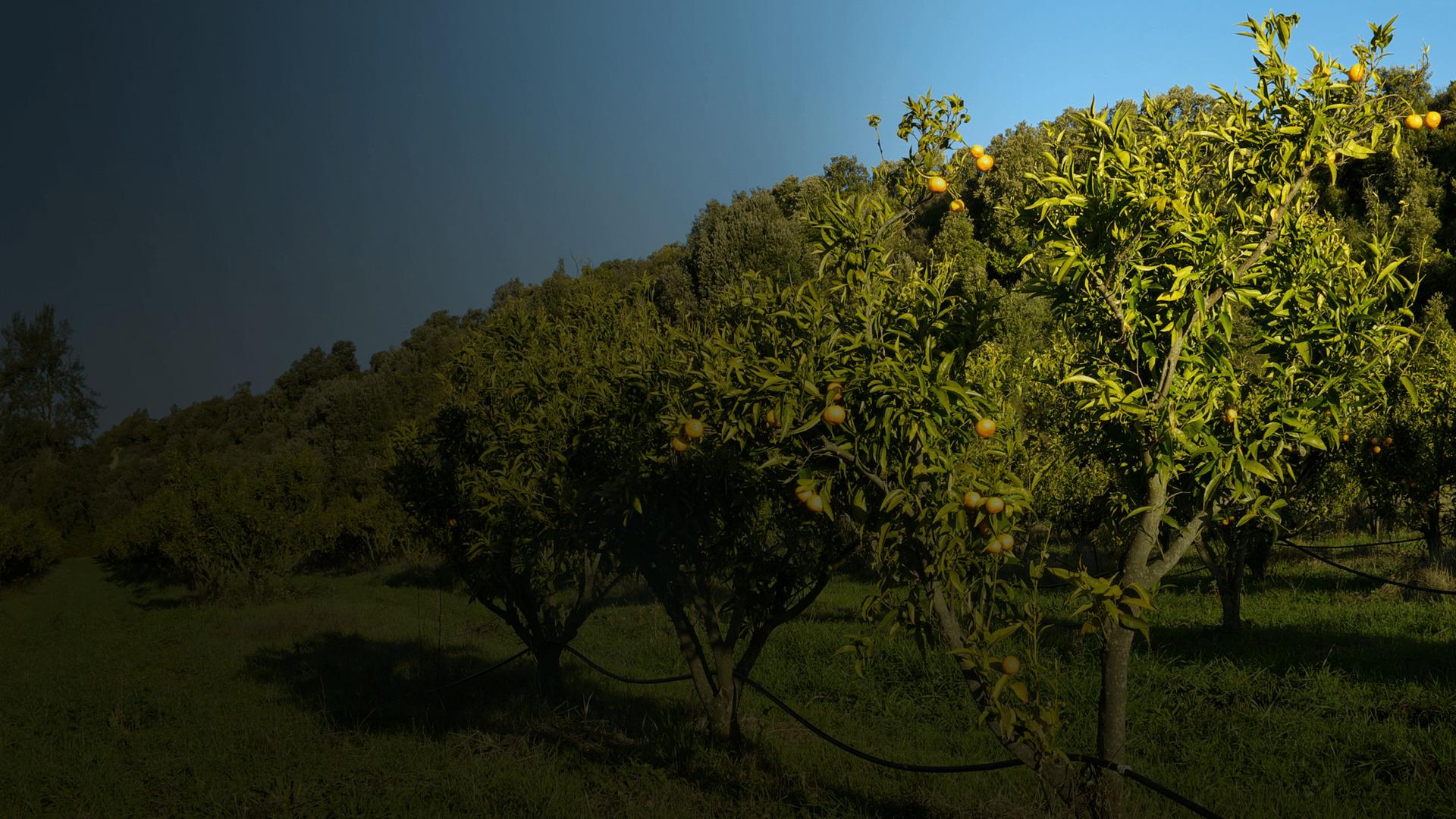Agri'Stella : Fleur Mallaroni