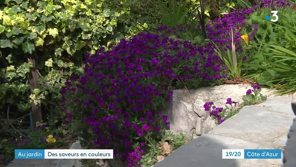 JT 19-20 Côte d'Azur