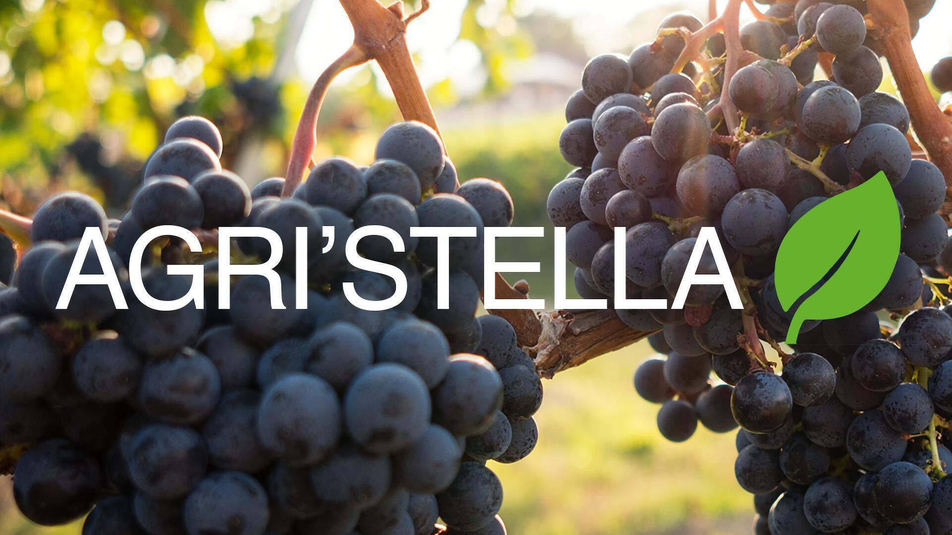 Agri'Stella : Pascal Leonetti
