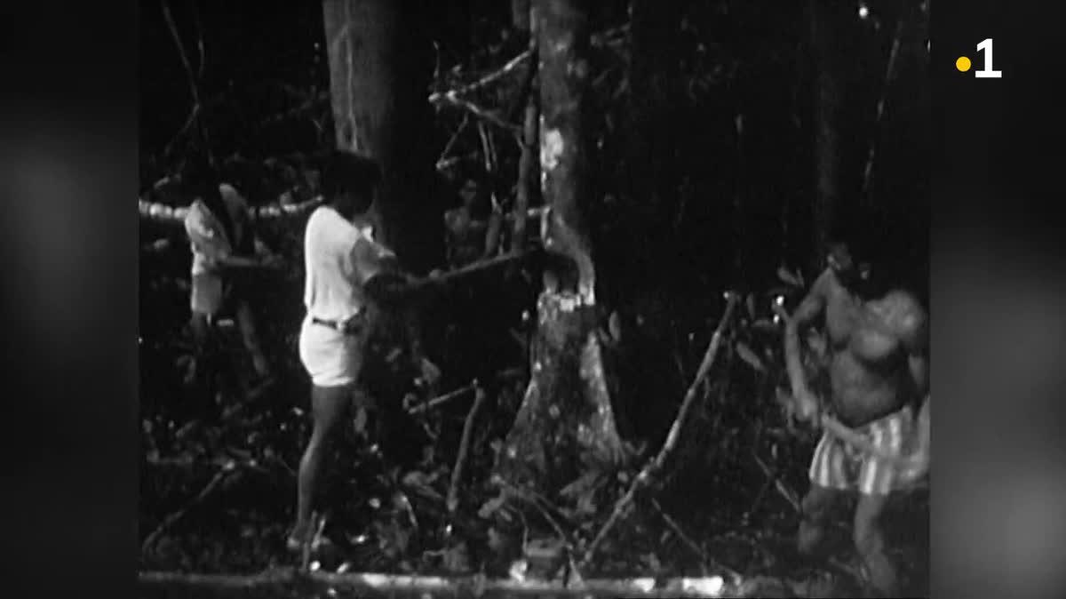 Histoire humaine de l'Amazonie - Les logiques de la déforestation