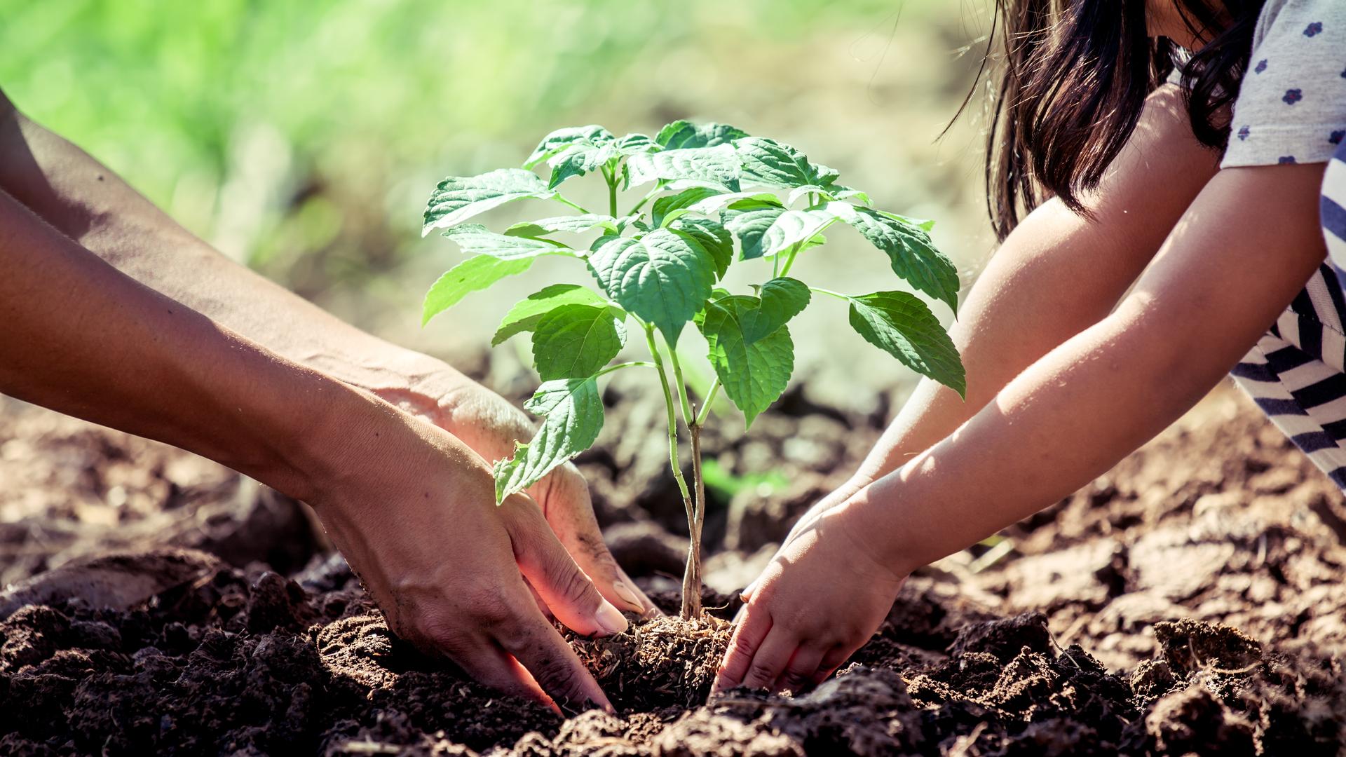 A tanu ana'e : Compost et la fertilisation