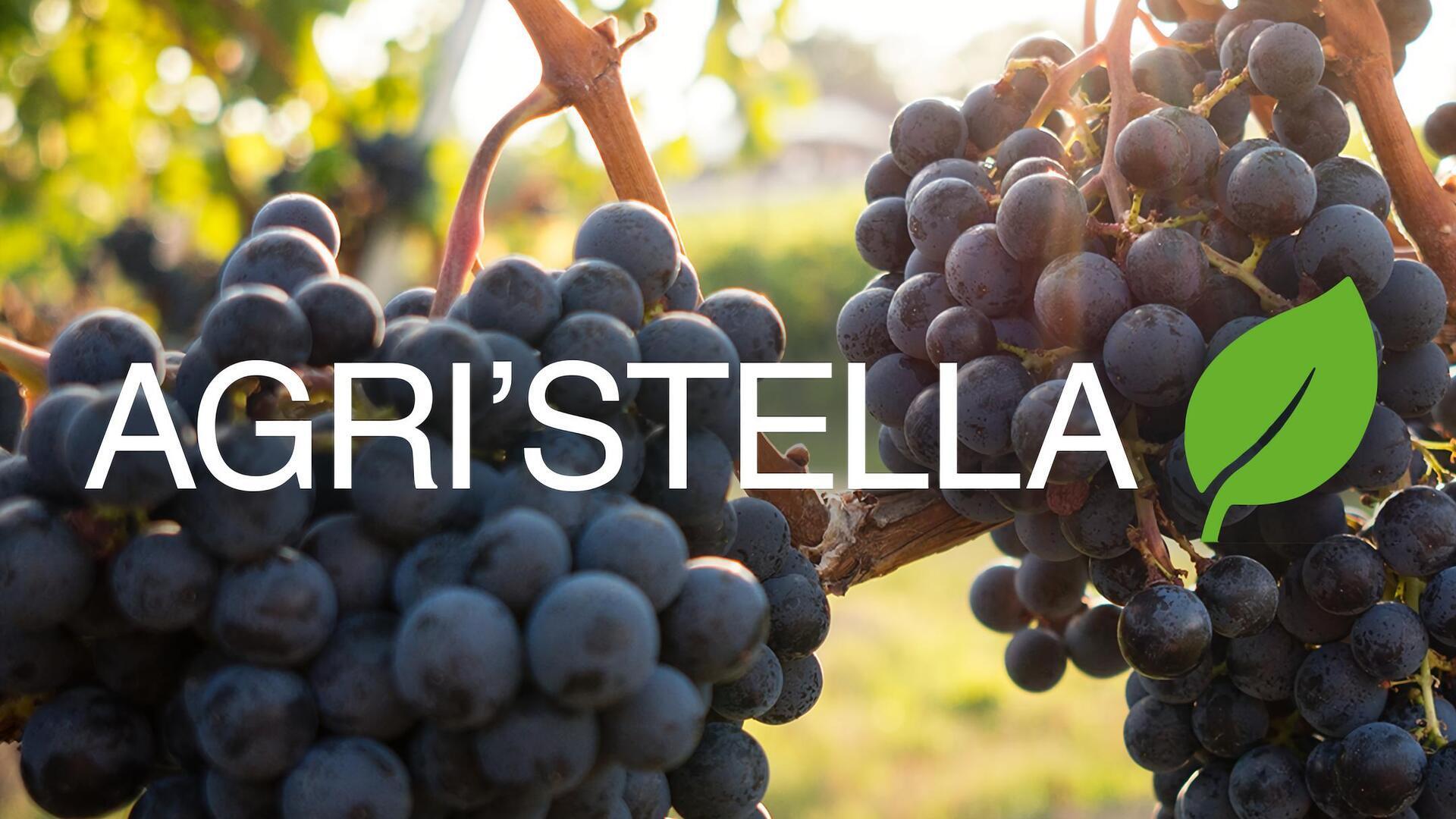 Agri'Stella : Claire Falcucci